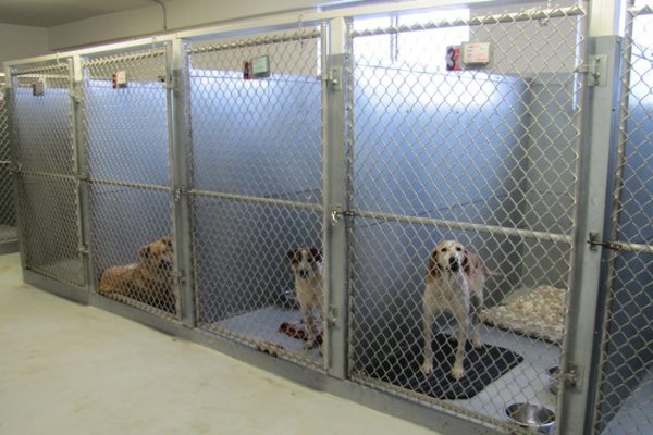 Clinic Tour Dog Shelter